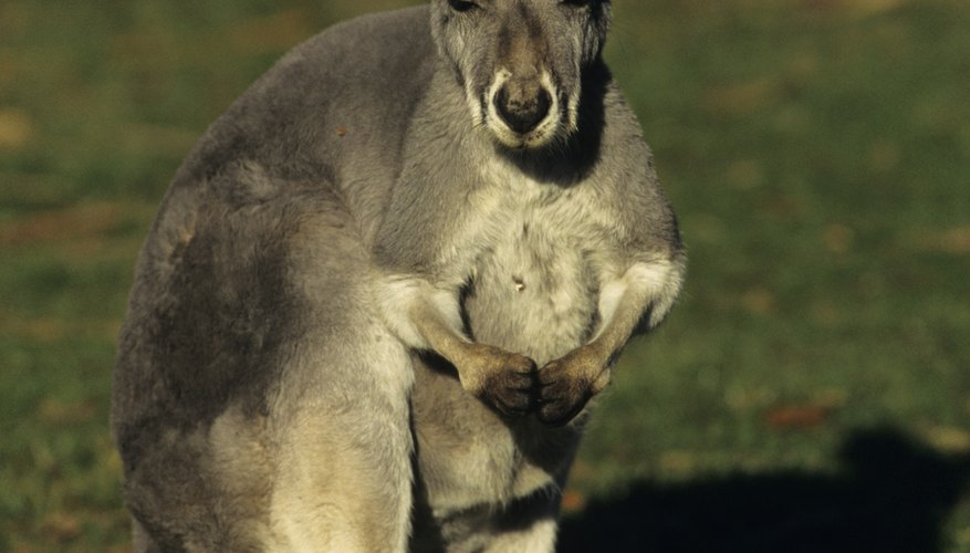 Kangaroos and their babies are always interesting.