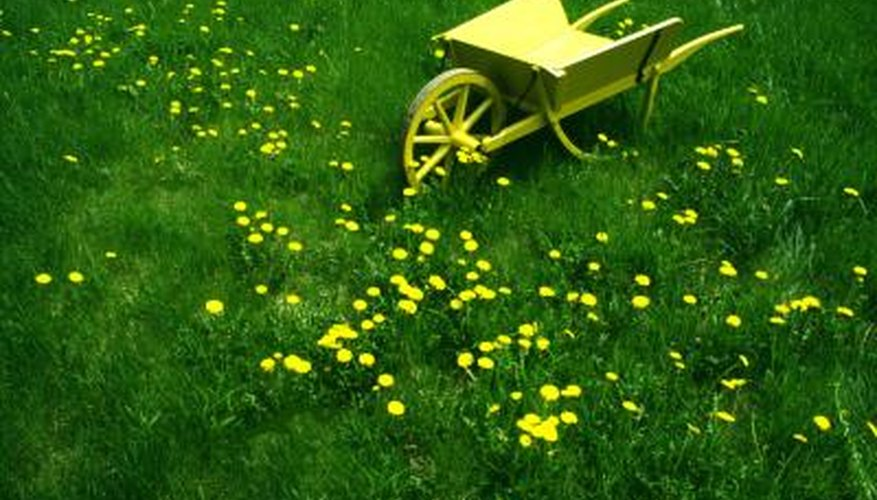 You can use a hose-end sprayer for weed killer that gets rid of dandelions