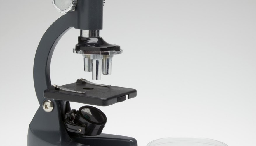 Zacharias Janssen was the first to develop a compound microscope, without which the field of microbiology couldn't exist.