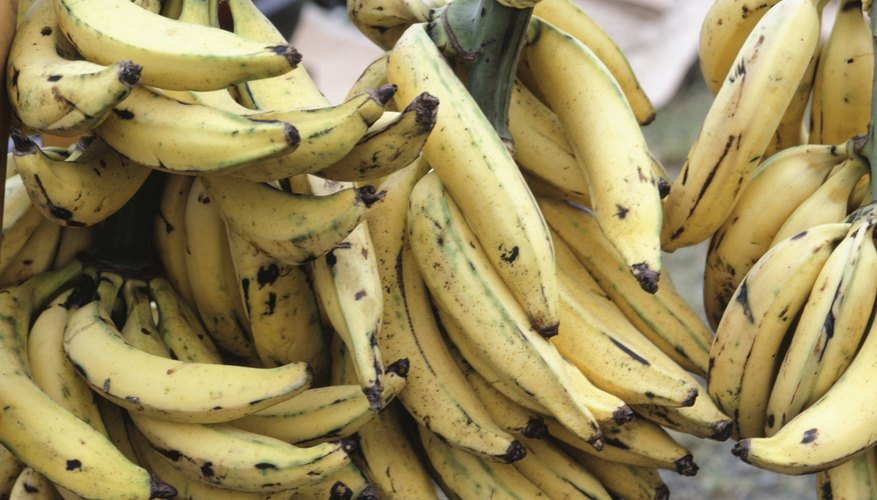 Plantains and bananas are readily available for easy snacks in Puerto Rico.