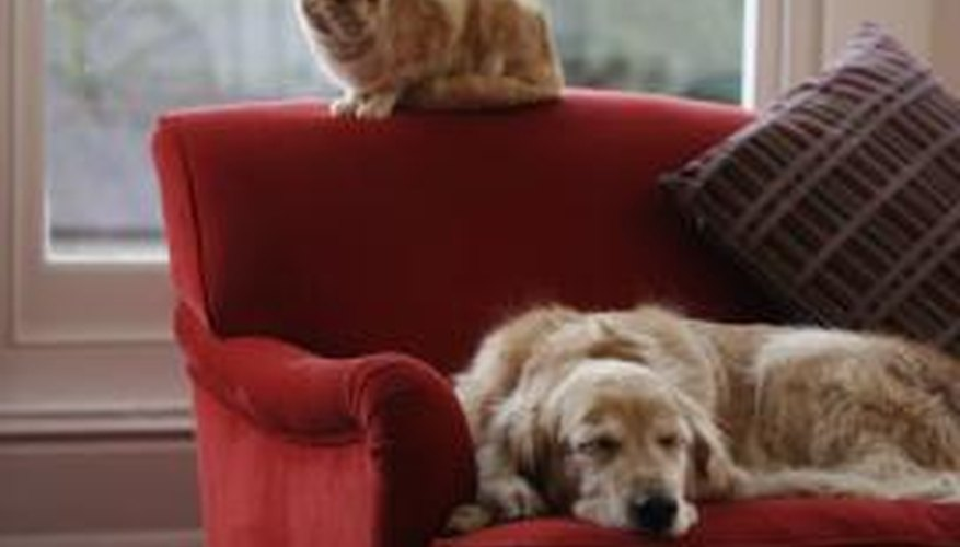 Protect your furry family members from the harmful effects of a gas leak.