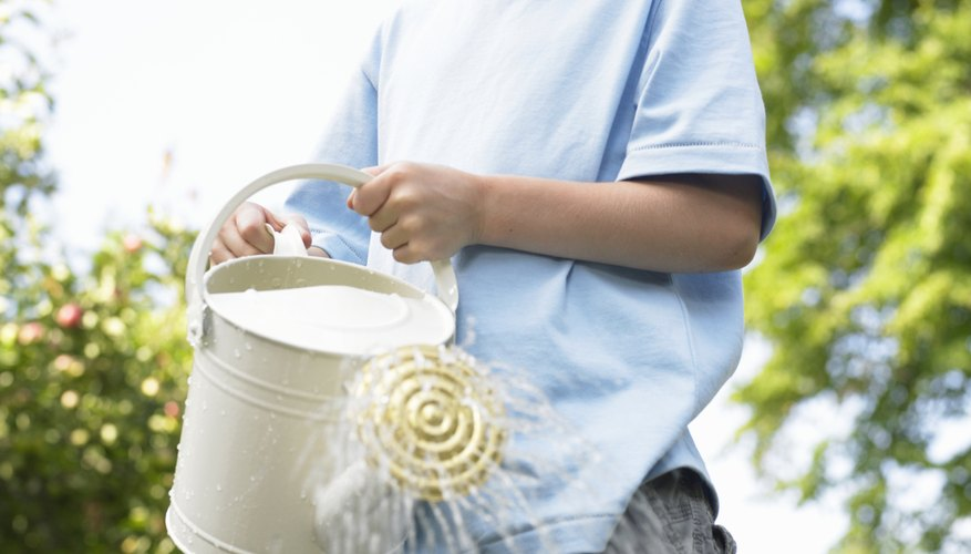 Small gardens give children a chance to explore plant science.