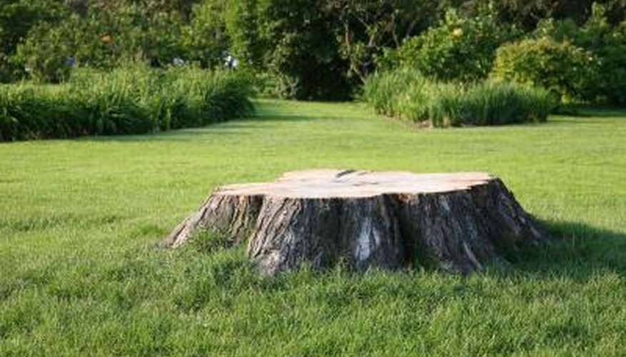 Powdered milk can help accelerate the tree stump rotting process.