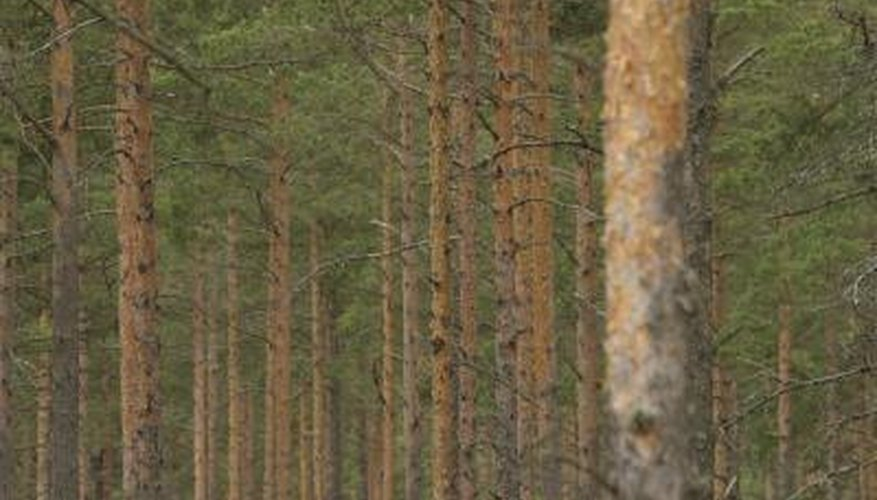Agroforestry differs from traditional forestry by growing other crops on the same land.