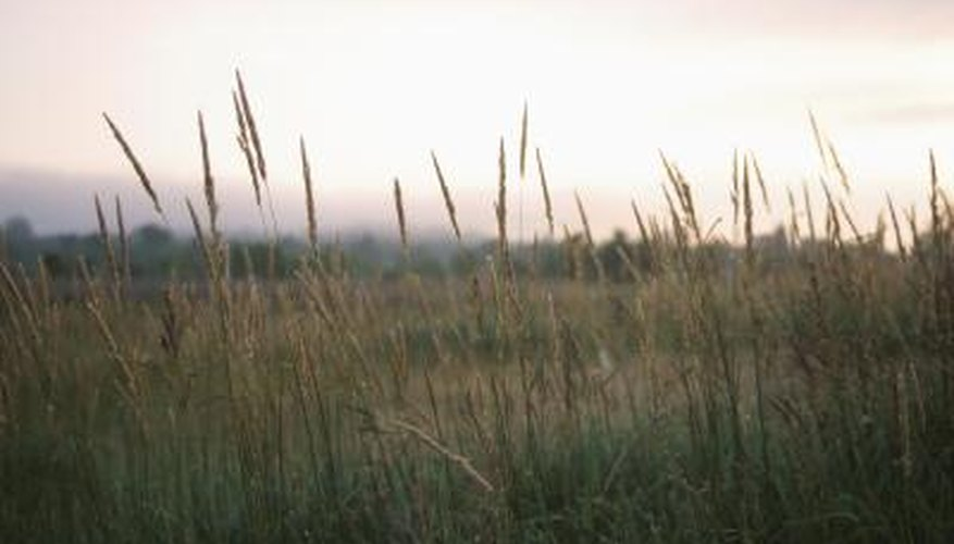 Bulrush are an invasive species that can dominate an area if left unchecked.