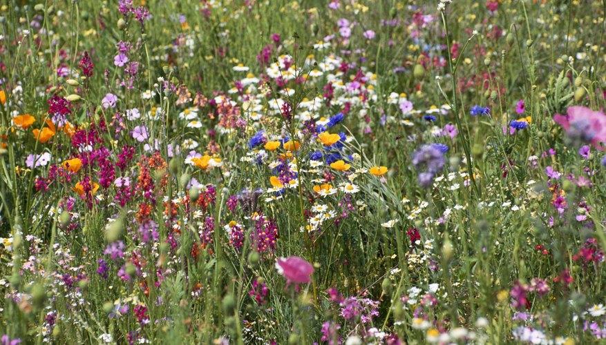 Flowers of Beauty