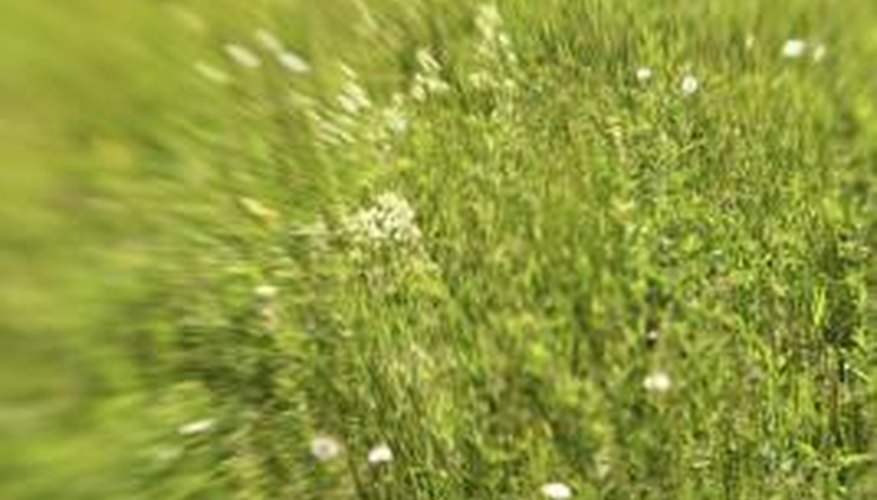 Ammonia is both helpful and dangerous to lawns.