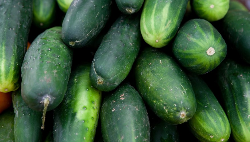 Cucumbers were a favorite vegetable of the Babylonians.