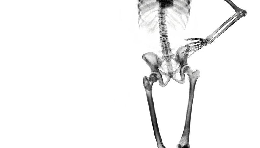 The skeletal system provides the framework for the body's shape.