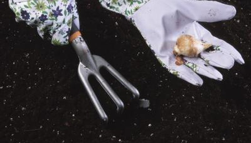 Dig up autumn crocus bulbs and replant in midsummer when dormant.