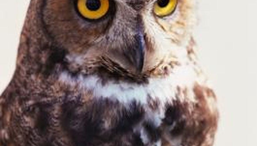 Owl calls are fun ways to signal your friends.
