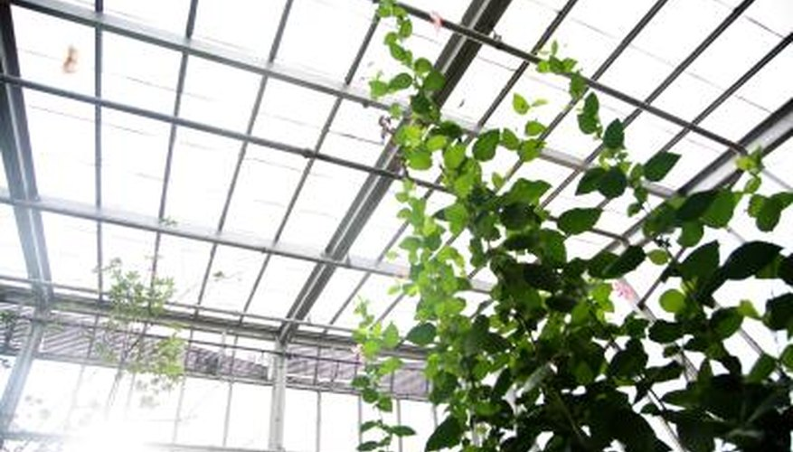 Greenhouses have pros and cons.
