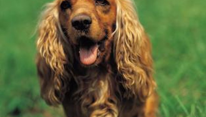 Outdoor dogs are more prone to matted fur and dreadlocks.