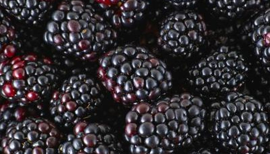 Dark, sweet fruit is one of the advantages of growing blackberry bushes.