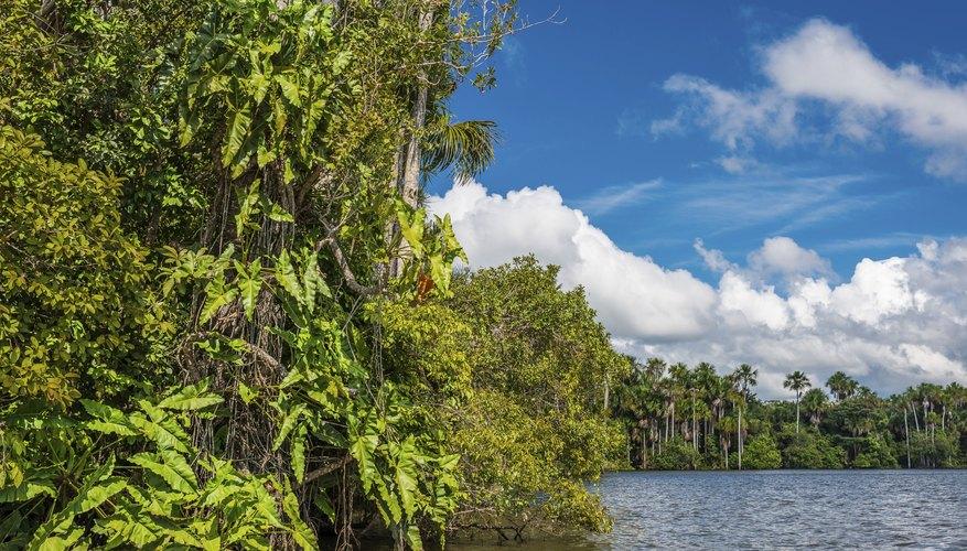 The Amazon jungle in Peru