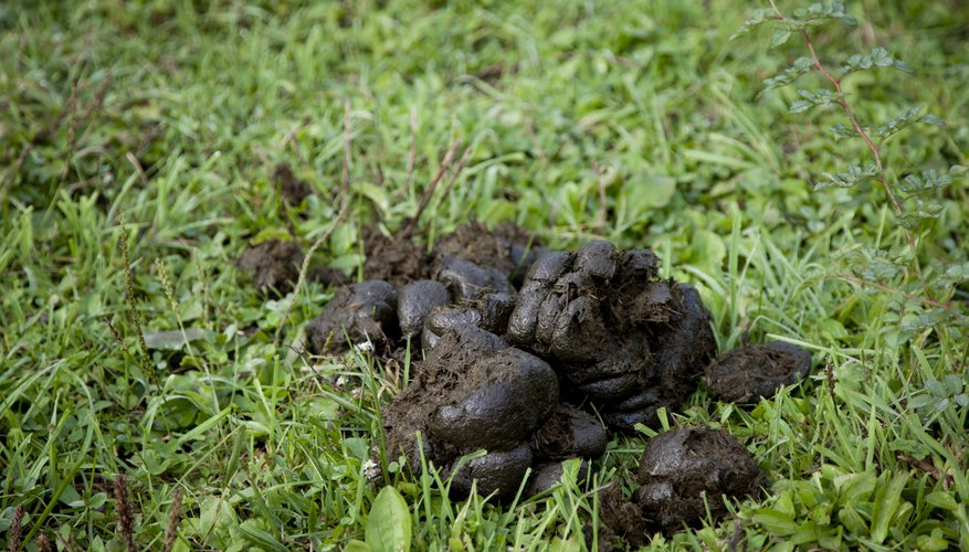 Process horse manure before putting it on your garden.