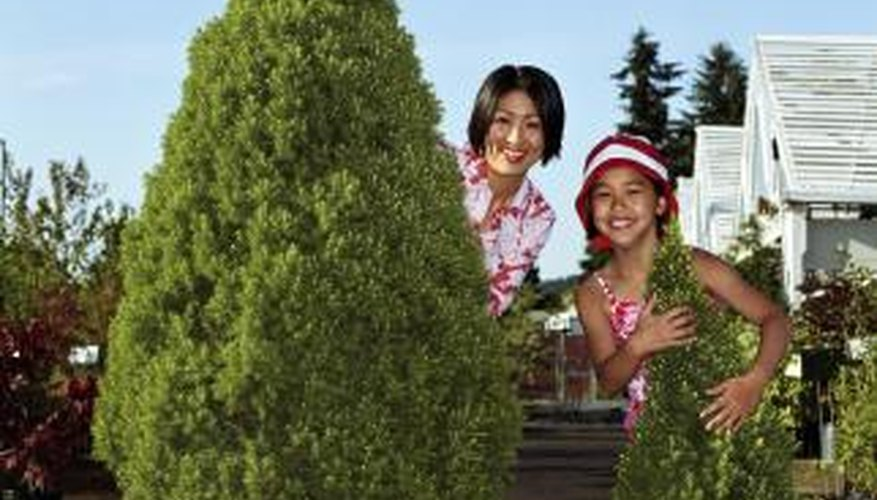 Consider the mature size of the tree when planting conifers in pots.