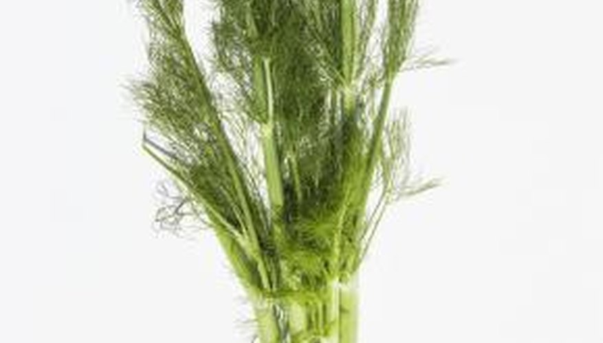 Fennel is an excellent addition to many dishes and can used as both a vegetable and a spice.