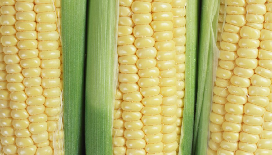 The average Aztec ate a lot of corn every day.
