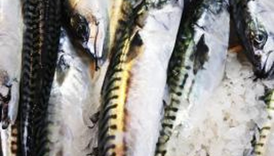 Mackerel are slim fish with small scales.