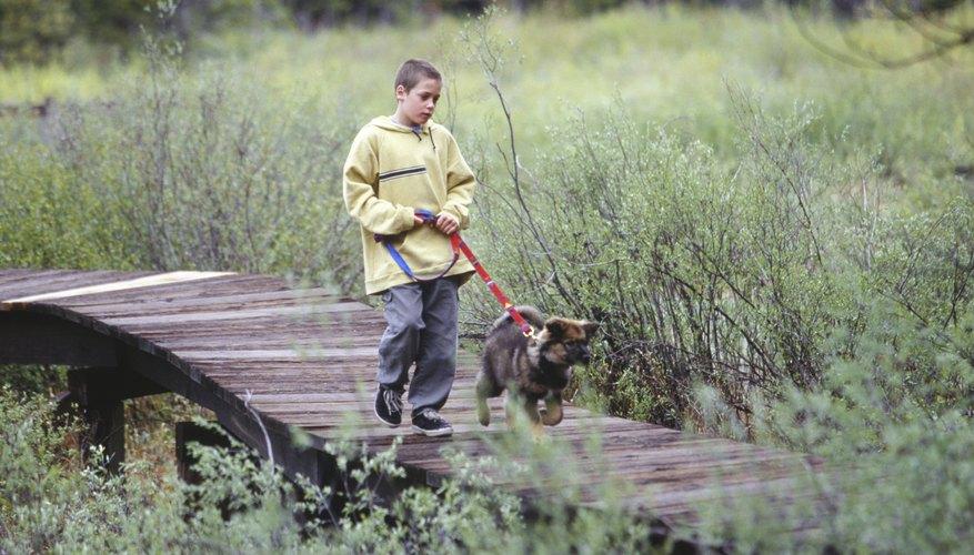A young boy walking a dog.