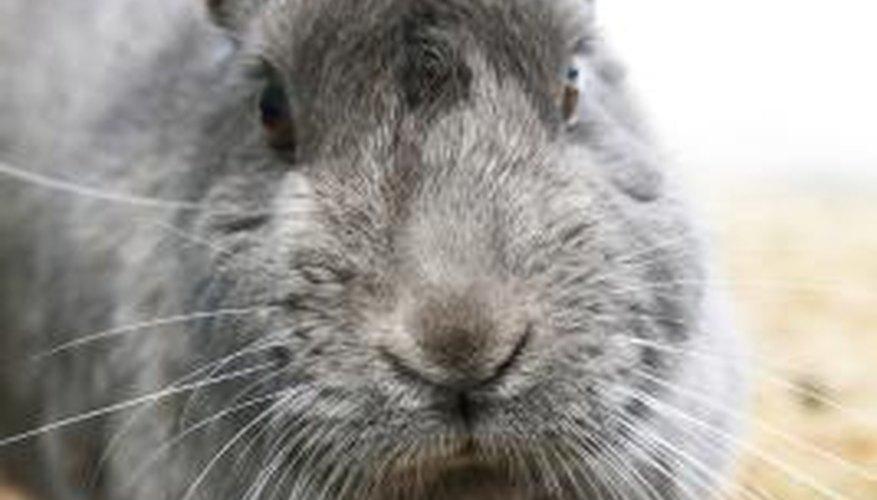 Rabbits easily burrow under many standard garden fences.