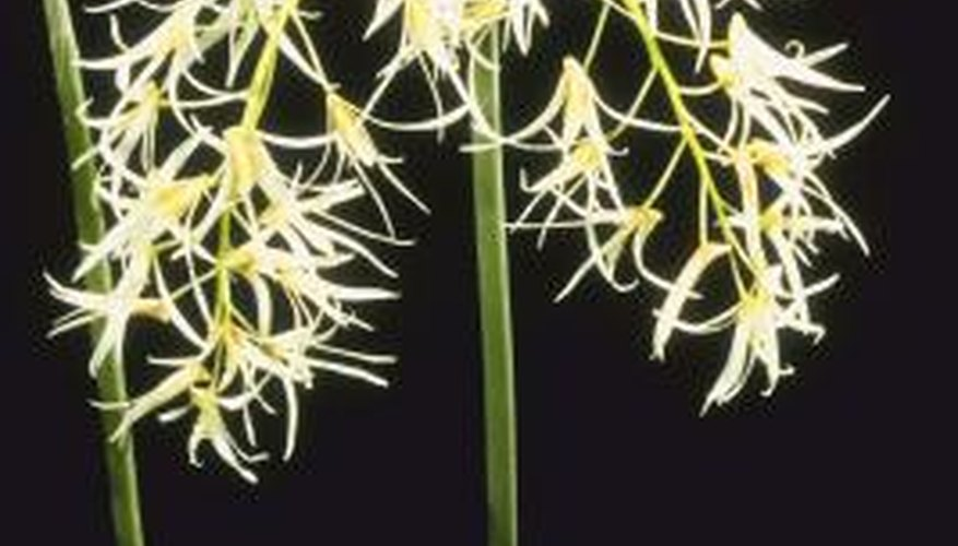 The orchid family is composed of about 20,000 species found worldwide.
