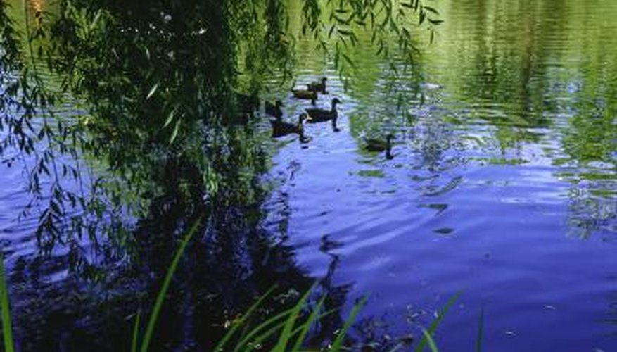 Plantings of trees along river banks can provide shelter for aquatic wildlife.