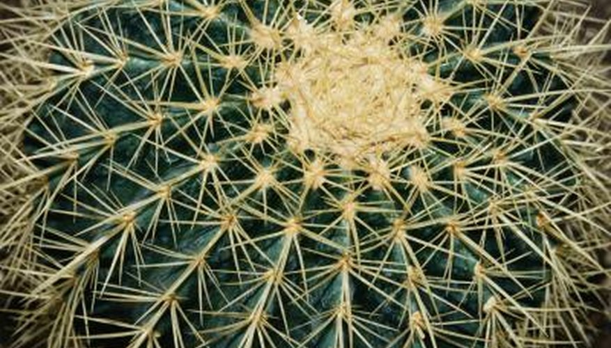 Make sure a cactus is healthy and pest-free before you bring it into your home.