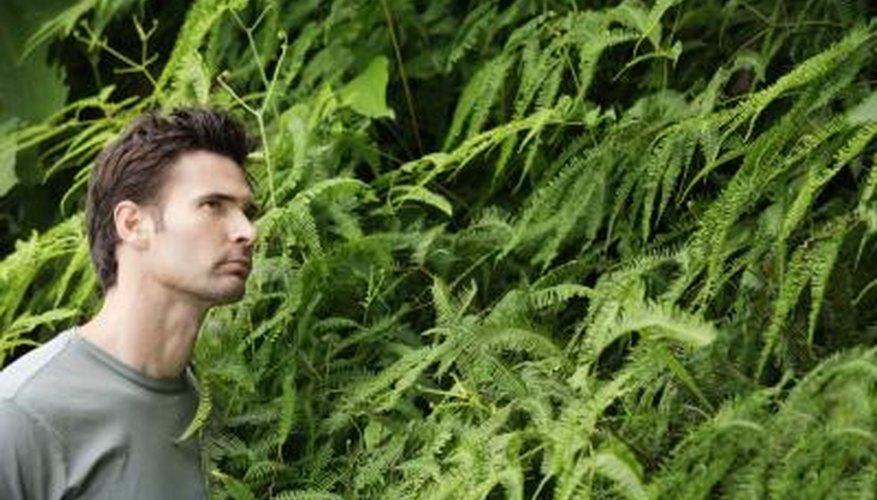 If Boston ferns become invasive, eradicate them.