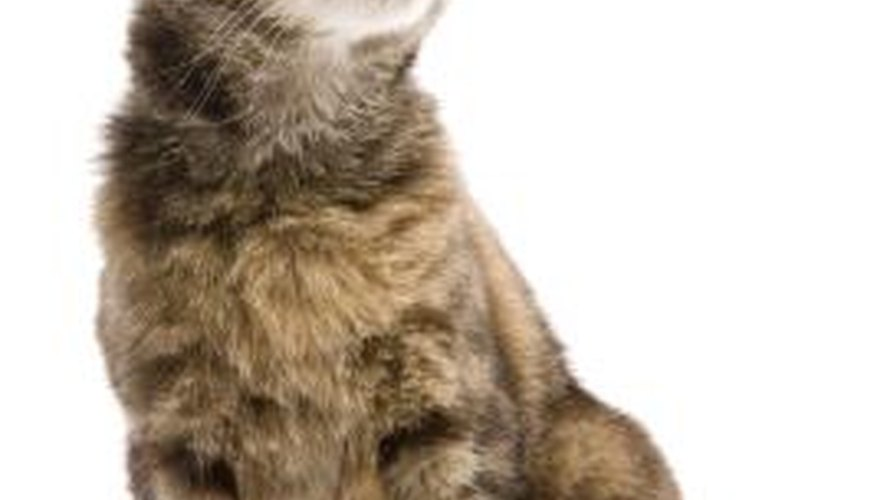 When cats get disoriented, it could be a major health concern.