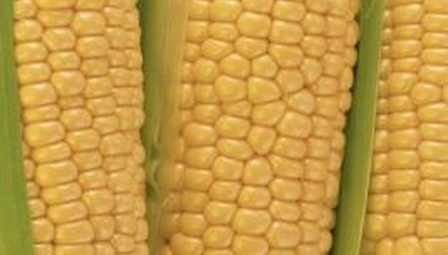 It's easy to determine if corn on the cob is still fresh.