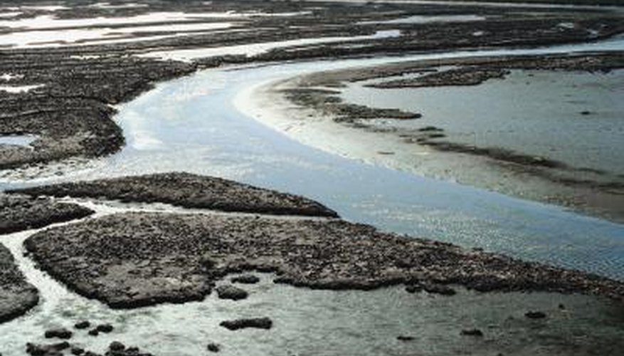 Mudflats in estuaries may be home to many burrowing invertebrates.