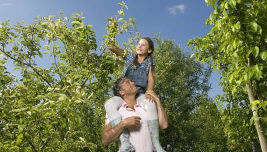 Fruit trees generally do not require regular fertilisation.