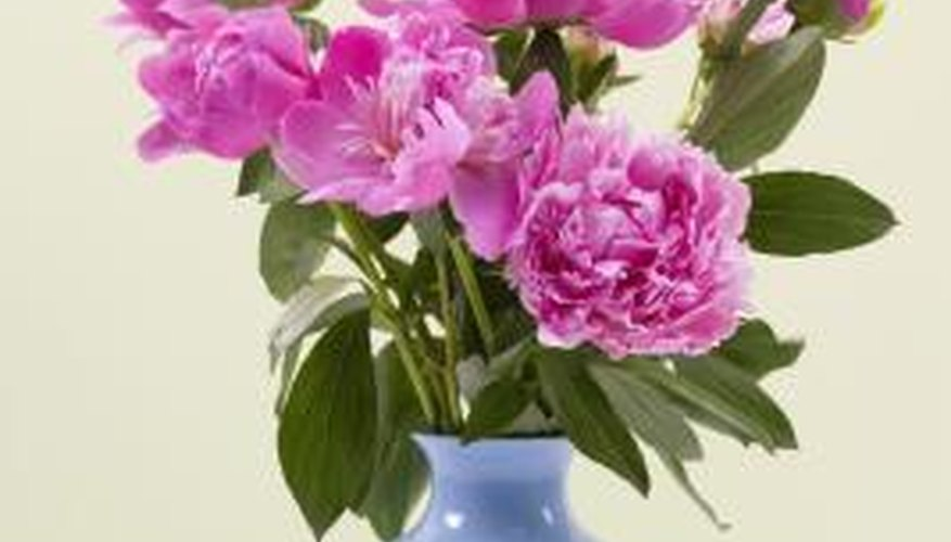 Peonies are poisonous.