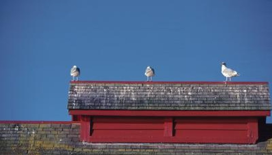 Bird droppings on brick can pose a health threat.