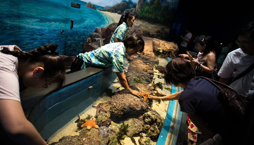 Share your knowledge by working at an aquarium; inspiring children through your interest in marine biology is one of the best ways to show your dedication!