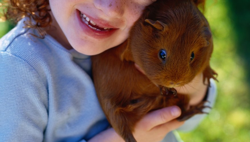 Teach your kiddo proper handling for safe and affectionate interactions.