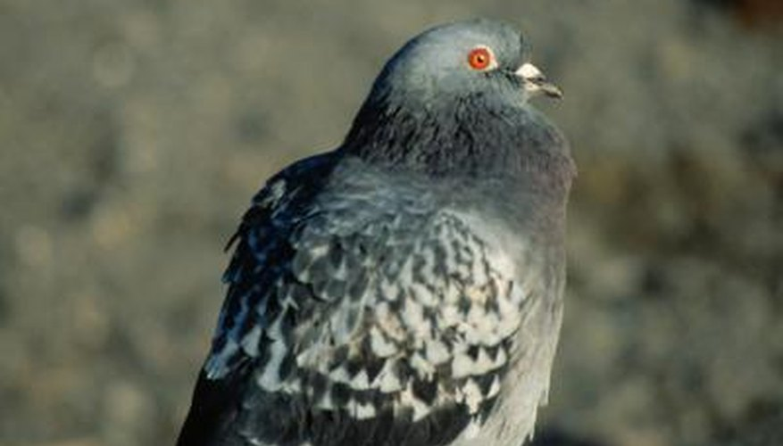 Birds can be a persistent nuisance on a carport.