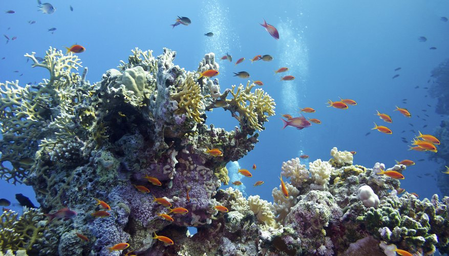 Fish swimming by a coral reef.