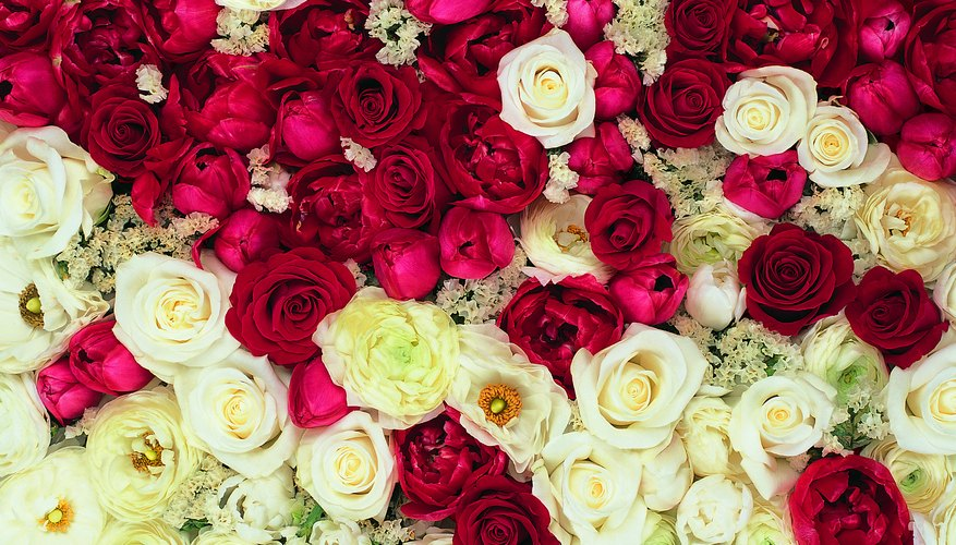 A mix of red and white flowers says I am sorry.