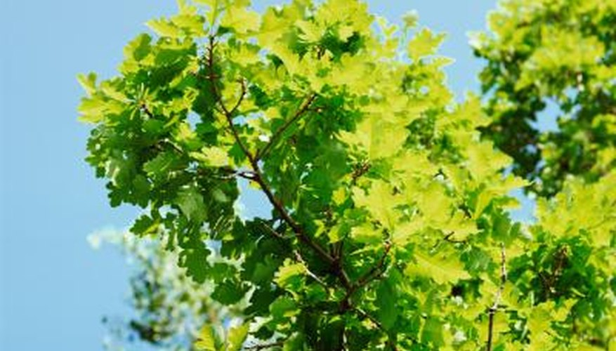 Oak trees are home to a variety of animal species