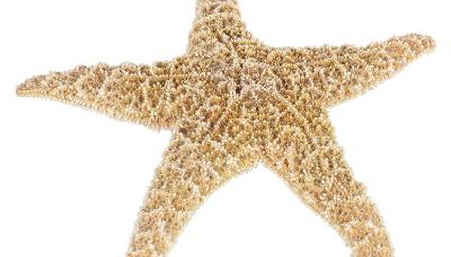 Starfish can contribute to a home's seashore decor.