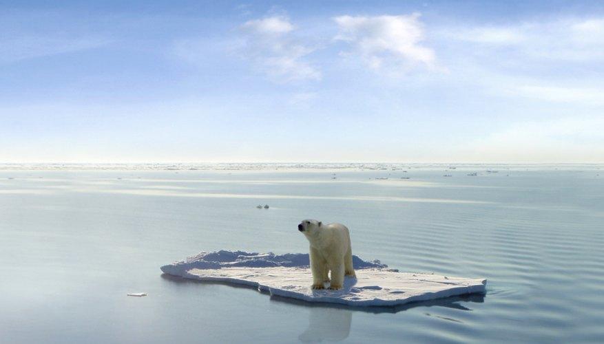 Bear on floating ice