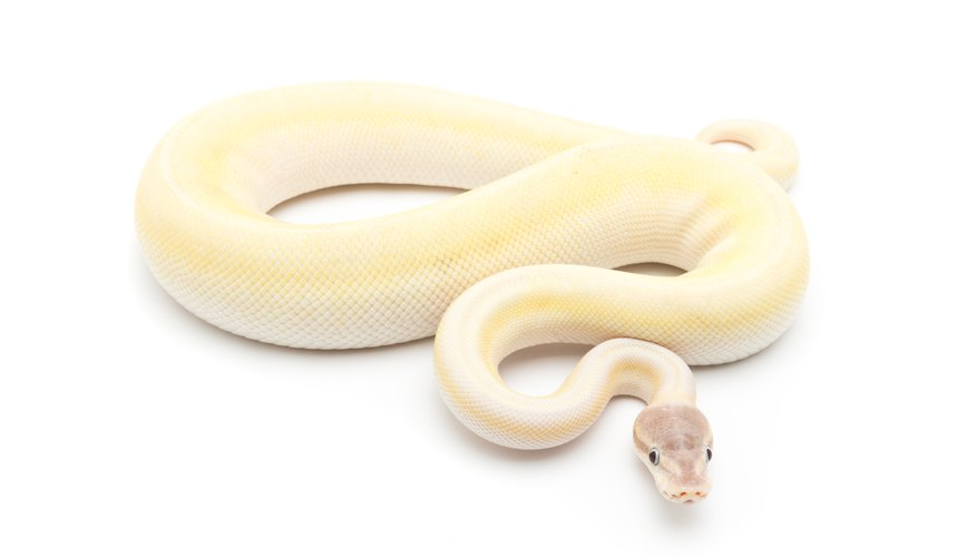 What Is a White Snake Symbolic For?
