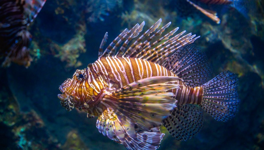 What Is the Different Between Freshwater Vs Saltwater Fish ...