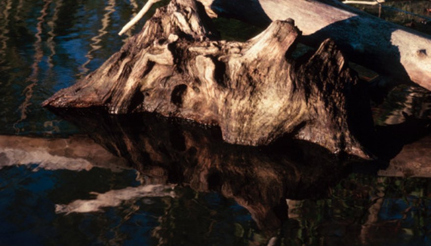 Driftwood must be dried before it is used in a project.