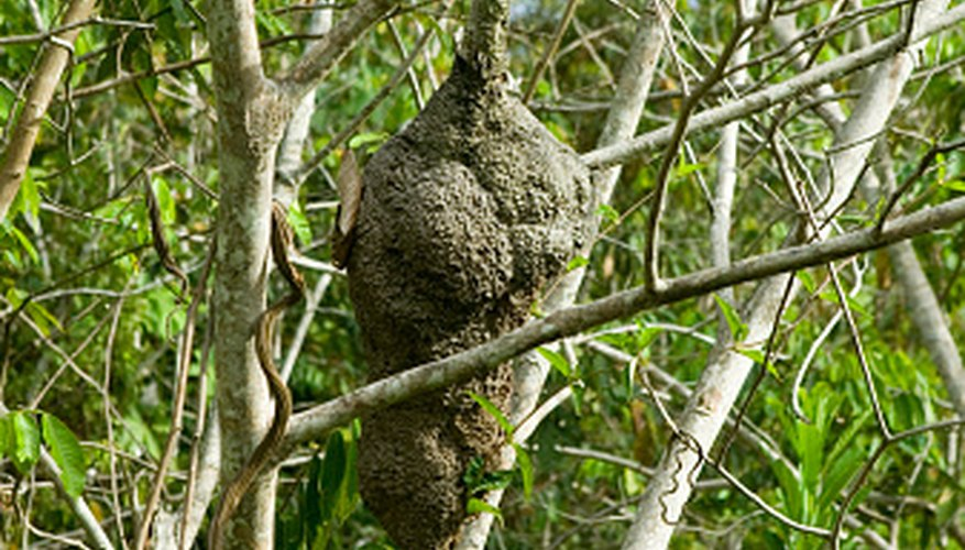Bird Nests That Hang From Small Branches Sciencing