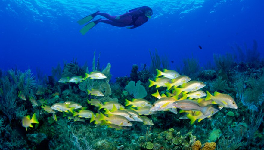 Jacques Cousteau was a scuba pioneer; the first explorer of ocean life.