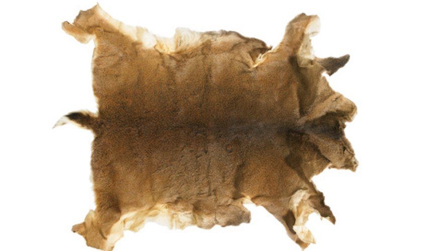 Deer hide was traditionally one of the most popular animal skins cured by Native Americans.